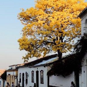 Learn about Brazilian Culture
