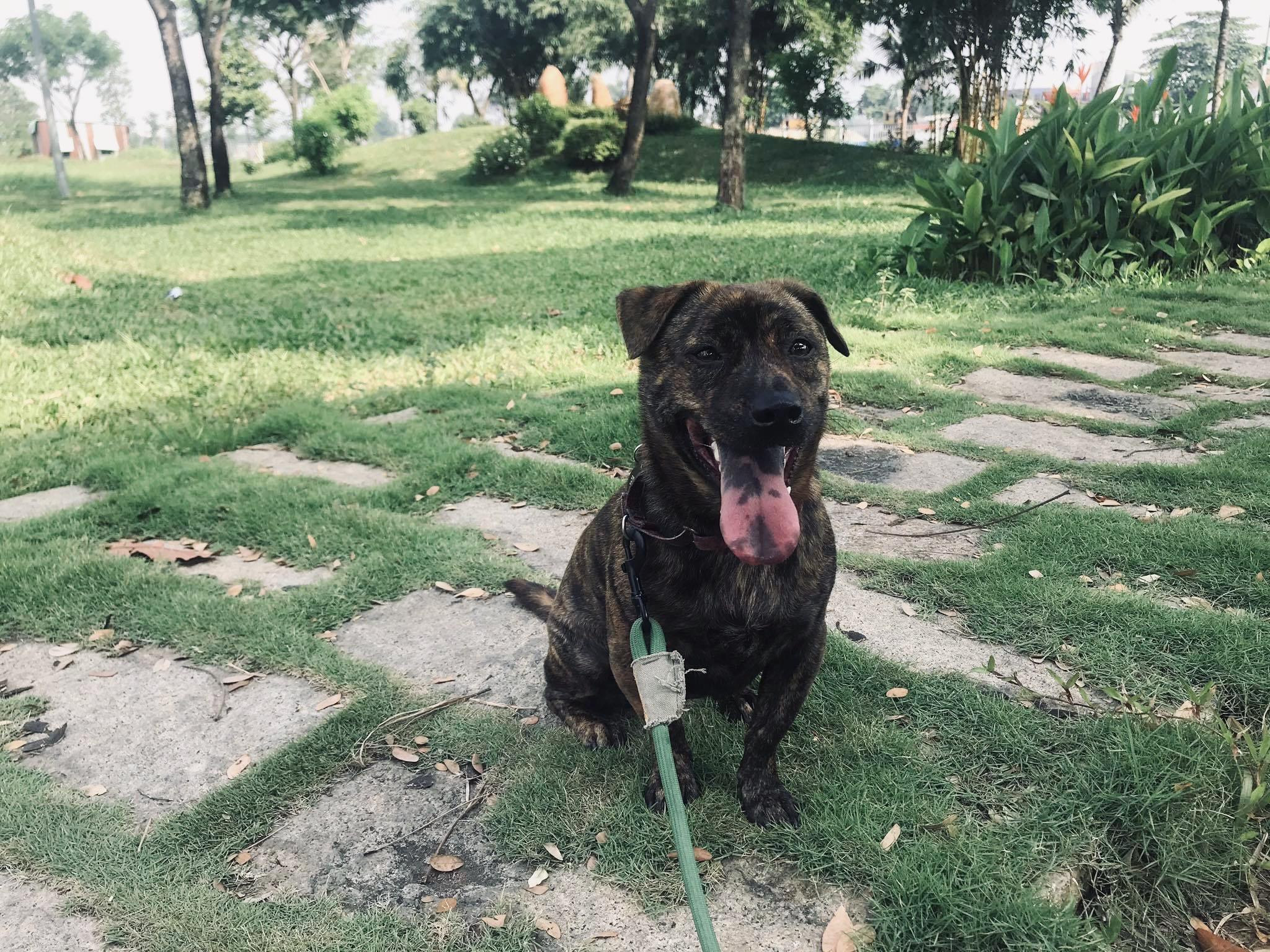 Adopted Vietnamese Pandemic Dog